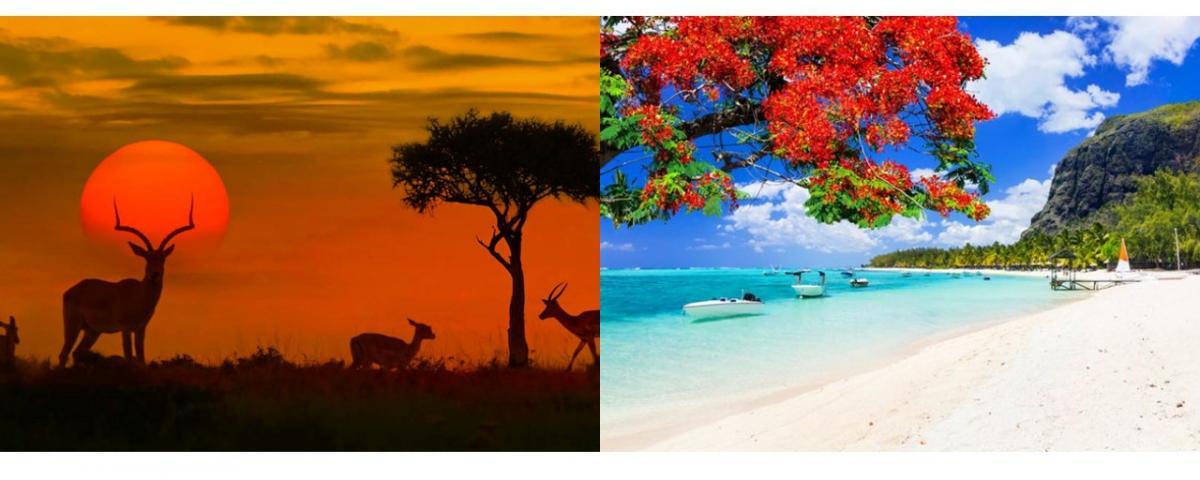 Classic South Africa & Mauritius Honeymoon